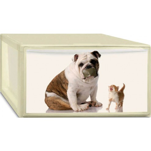 Caja Ordenacion Photobox M Puppy.